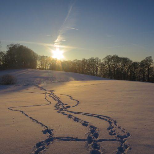Spuren Schnee